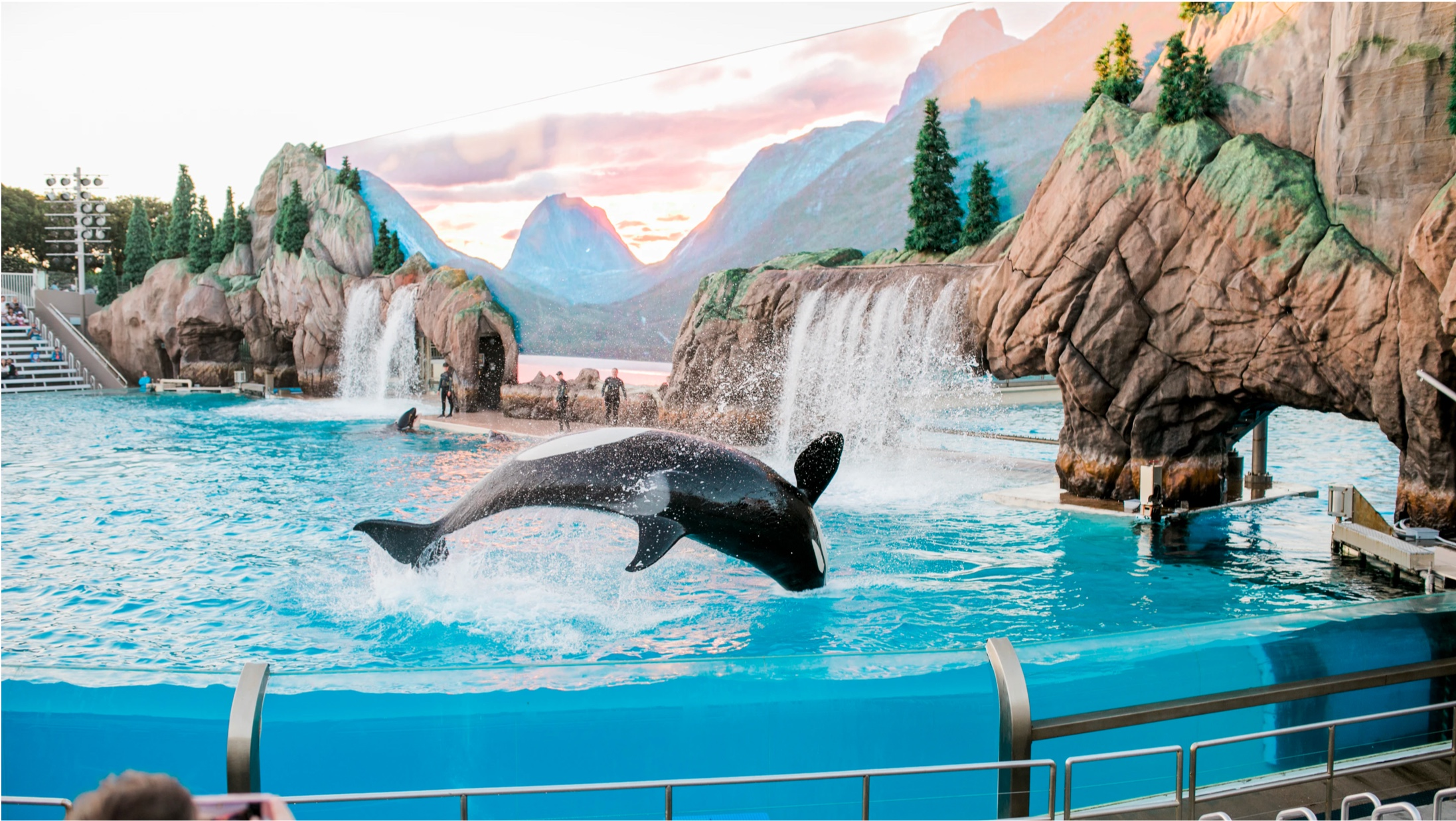 black and white orca whale jumping in a pool of water with rocks and waterfalls coming down and tall mountains in the background. Gated pool area and stadium seating behind.
