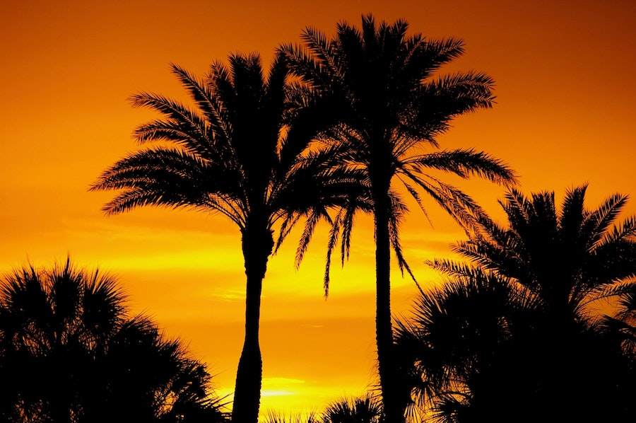 An orange and yellow sunset with palm trees