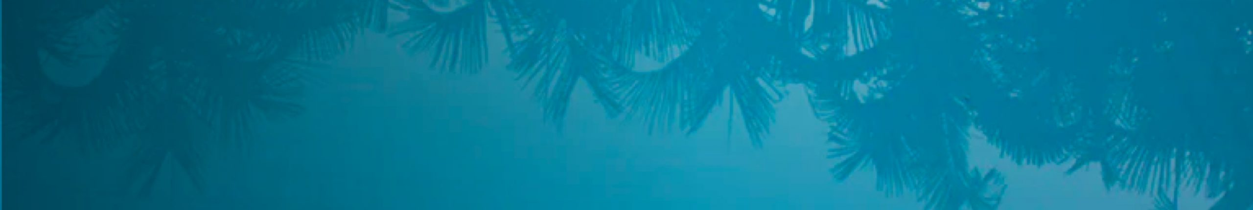 Blue palm tree banner